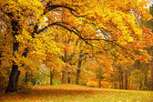 depositphotos_11782835-Autumn--Gold-Trees-in-a-park
