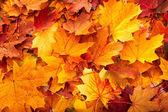 depositphotos_3916630-Background-group-autumn-orange-leaves