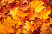 depositphotos_3916630-Background-group-autumn-orange-leaves